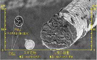PM2.5の大きさ写真